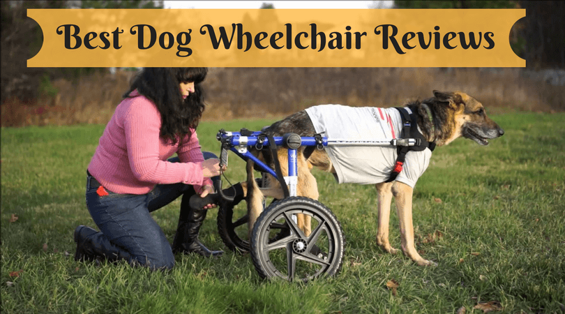 Best Dog Wheelchair Reviews