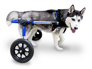 Dog Wheelchair – For Medium
