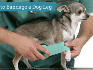 How to Bandage a Dog Leg