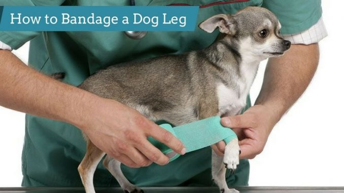 How-to-Bandage-a-Dog-Leg
