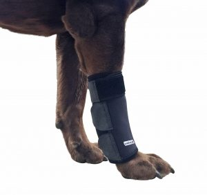 Labra Co. Dog Canine Front Leg
