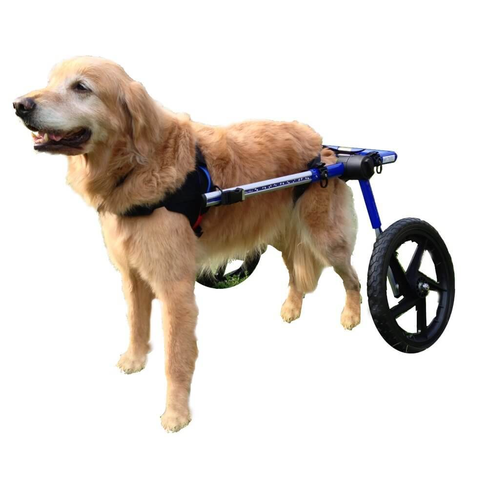 5-best-dog-wheelchair-reviews-and-buying-guide-unbeaten-rolling