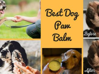 dog paw lotion