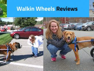 walkin wheels dog wheelchair reviews