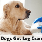 Dog Dragging Back Legs: Causes Symptoms and Treatment