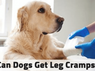 Can Dogs Get Leg Cramps